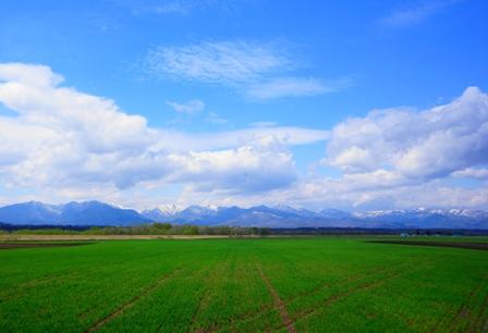 広い大地へゴーッ!四季折々の北海道は新婚旅行人気上昇中!のサムネイル画像