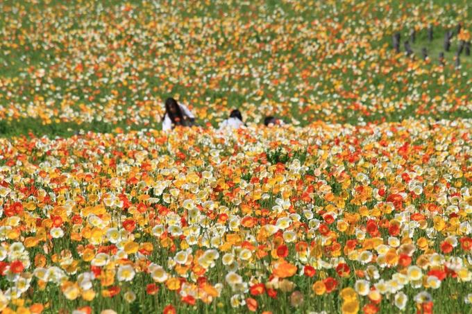 東京にも劣らない埼玉県の魅力的なデートスポットをご紹介!!のサムネイル画像