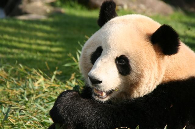 デートで彼と一緒に行きたい!日本全国のおすすめ動物園9選!のサムネイル画像