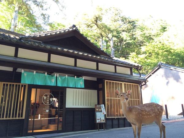 奈良のデートスポット、定番の奈良公園とその他の人気スポットまとめのサムネイル画像