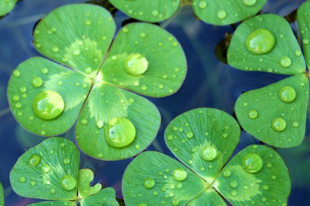 東海地方で雨の日デートで利用したいお薦めスポットベスト5選のサムネイル画像