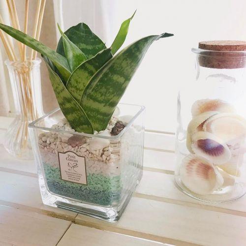 お部屋をプチプラで春っぽく♡《100均ミニ観葉植物》でお手軽に緑ある暮らしを!のサムネイル画像