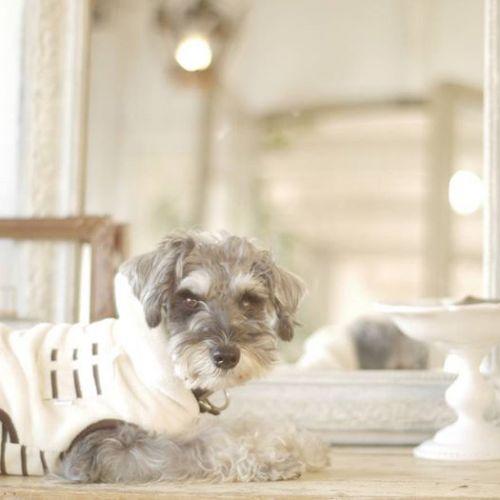 キュートなネコやイヌを一発検索♡人気の【#ハッシュタグ】4選のサムネイル画像