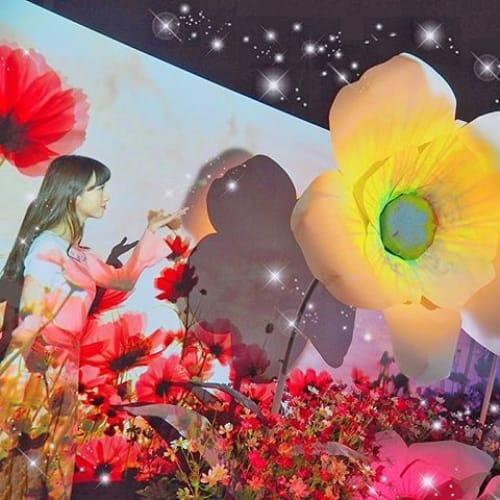 フォトジェお花見♡【〇〇×フラワーズバイネイキッド】1/23開催のサムネイル画像