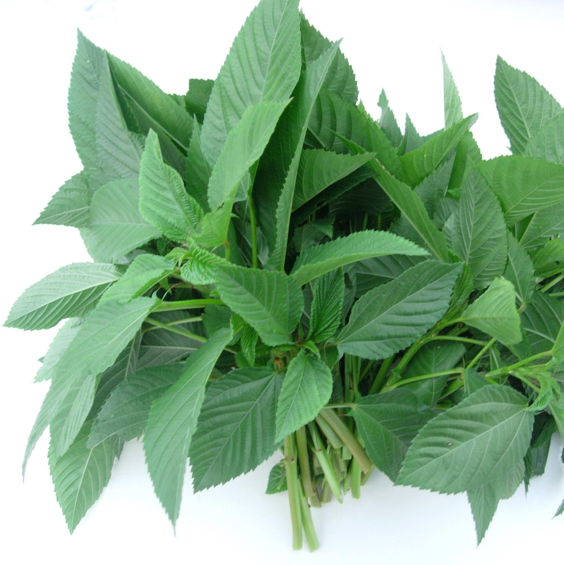 【王様の野菜=モロヘイヤ】美容にも健康にもいい!うまうまレシピ!のサムネイル画像