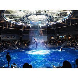 水族館デートを120%楽しむ楽しみ方!カップルで水族館へいこうのサムネイル画像