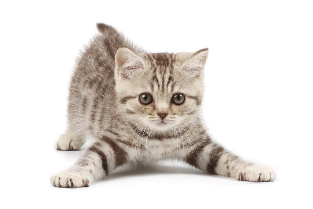 猫好きさんにプレゼントしたいもの おすすめの猫グッズあれこれのサムネイル画像